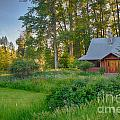 Cottonwood Cottage With Spring Lupine by Omaste Witkowski