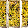 Cottonwood Fall Foliage Colors Rustic Farm Window View by James BO  Insogna