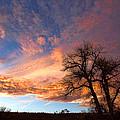 Cottonwood Sky by Jim Garrison