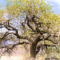Cottonwood Tree Digital Painting by Dianne Phelps