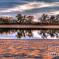 Cottonwoods At Barr Lake by Ron Taylor