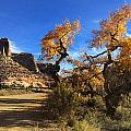 Cottonwoods In Buckhorn Wash 4059 by Ron Brown Photography