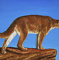 Cougar Cliff by Crista Forest