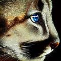 Cougar Cub by Jurek Zamoyski