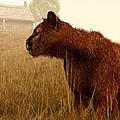 Cougar In A Field by Daniel Eskridge