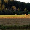 Country Bales  by Doug Gibbons
