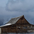 Country Christmas by Wildlife Fine Art