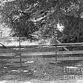 Country Fence by Stephanie Hanson