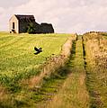 Country Lane by Amanda Elwell