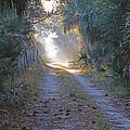 Country Lane by Jack Cushman