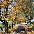 Country Lane by Roger Potts