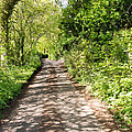 Country Lane by Roy Pedersen