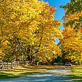 Country Lane by Steve Harrington