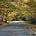 Country Lane by Tim Hauser