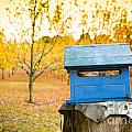 Country Letterbox by Tim Hester