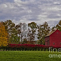Country Life by Susan Candelario