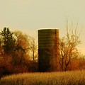 Country Morning by Gothicrow Images