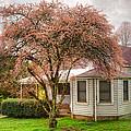 Country Pink by Debra and Dave Vanderlaan