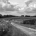 Country Road by Chris Scroggins