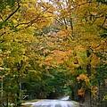 Country Road Fall Vermont by Deborah Benoit