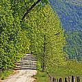 Country Road by Geraldine DeBoer