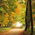 Country Road In Autumn by Terri Gostola