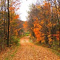 Country Road by Judy  Waller