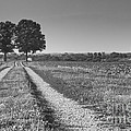 Country Road by Nicholas  Pappagallo Jr