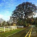 Country Road On Sauvie Island by Charlene Mitchell