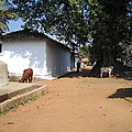 Country Side by ShitlaPrasad Gupta