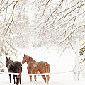 Country Snow by Cheryl Baxter