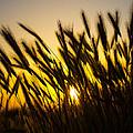 Country Sunset by Richard Cheski