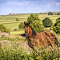 Countryside Horse by Amanda Elwell