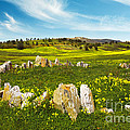Countryside With Stones by Carlos Caetano