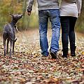 Couple And Dog Autumn Or Fall by Lee Avison