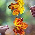 Couple Holding Autumn Leaves by Lee Avison