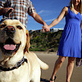 Couple Take Their Dogs For A Walk by Priscilla Gragg