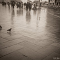 Couple Walking In The Rain San Marco by Beverly Brown