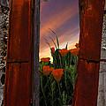 Courtyard Window by Debra and Dave Vanderlaan
