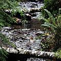 Covell Creek 1 by Edward Hawkins II