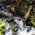 Covell Creek 4 by Edward Hawkins II