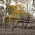 Covered Bridge In Autumn by Brenda Conrad