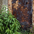 Covered In Rust by Paul W Faust -  Impressions of Light