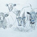 Cow Drawing by Mike Jory