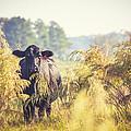 Cow Hiding In The Weeds by Karen Broemmelsick