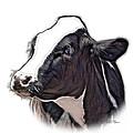 Cow Holstein - 0034 Fs by James Ahn