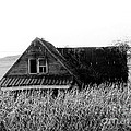 Cow House Black And White by Monica Withers