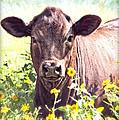 Cow In Wildflowers by Ella Kaye Dickey