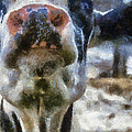 Cow Kiss Me Photo Art by Thomas Woolworth