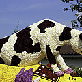 Cow On Clog 3 by Peter Lloyd